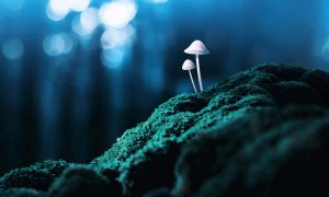 guardian2-Psychedelics are transforming the way we understand depression and its treatment - Robin Carhart-Harris